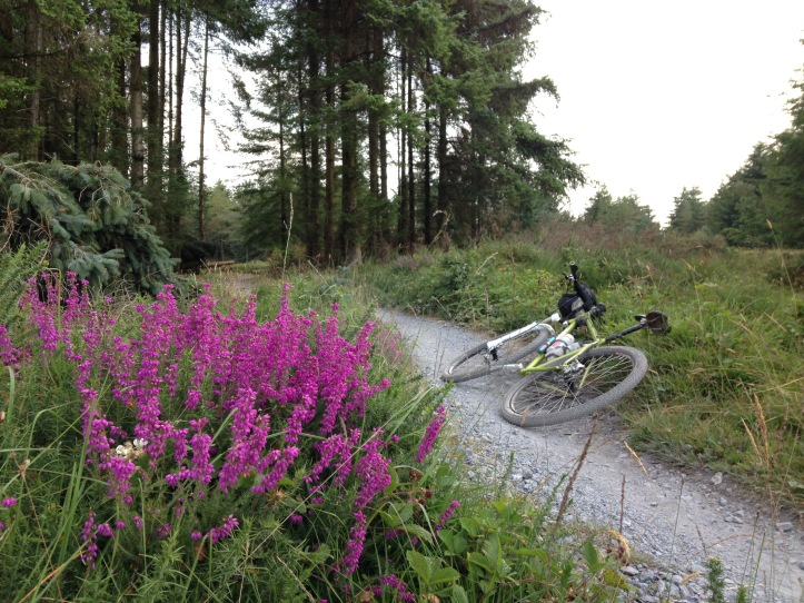 September: Haldon Forest trails